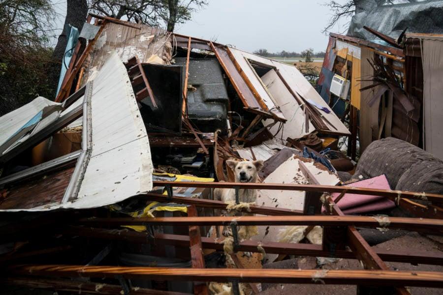 Dog House Destroyed