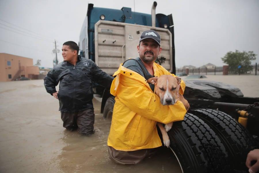 Dog Jacket Harvey