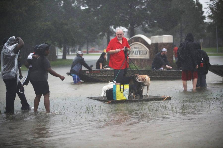 Dog Raft