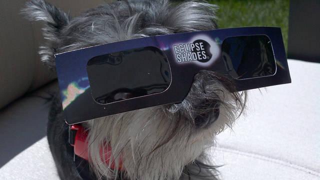 Dog Solar Eclipse Shades