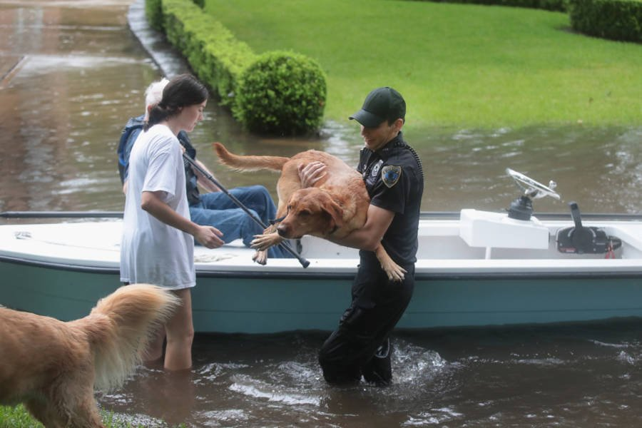 Harvey Dog Boat