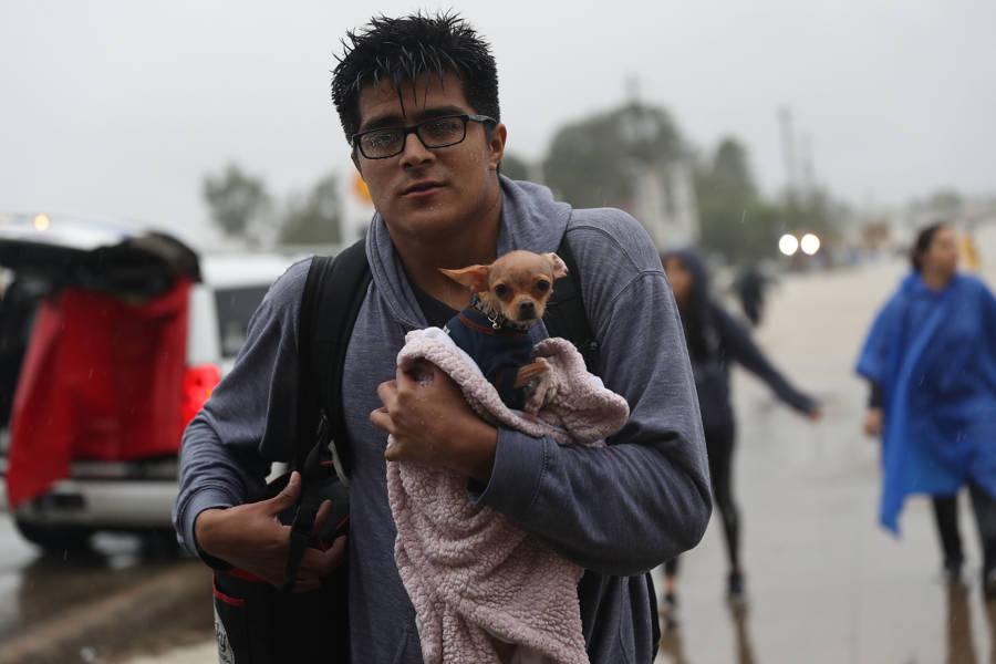Hurricane Harvey Dogs