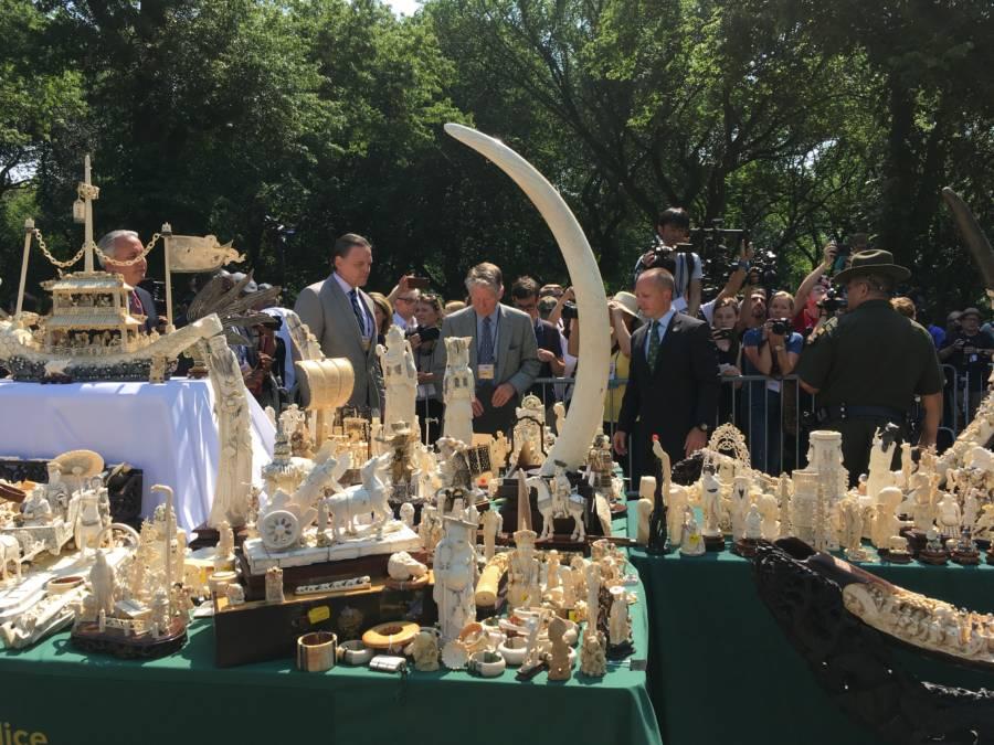 Ivory Ivory
