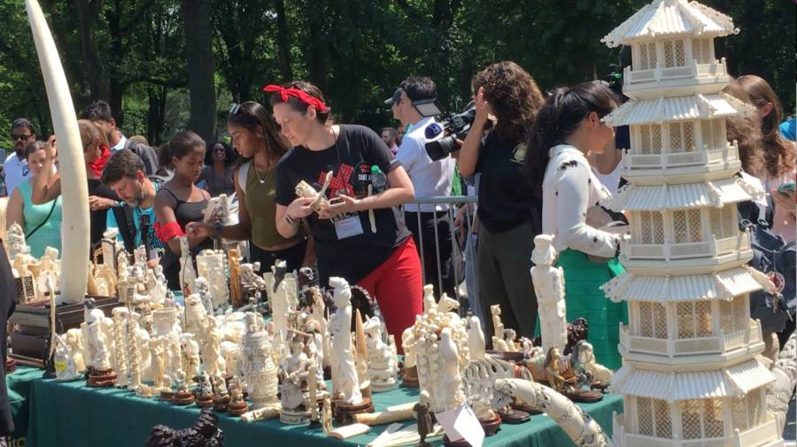 Ivory Selection