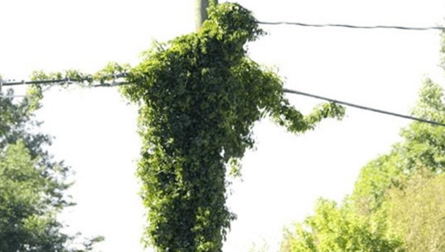 Jesus Telephone Pole