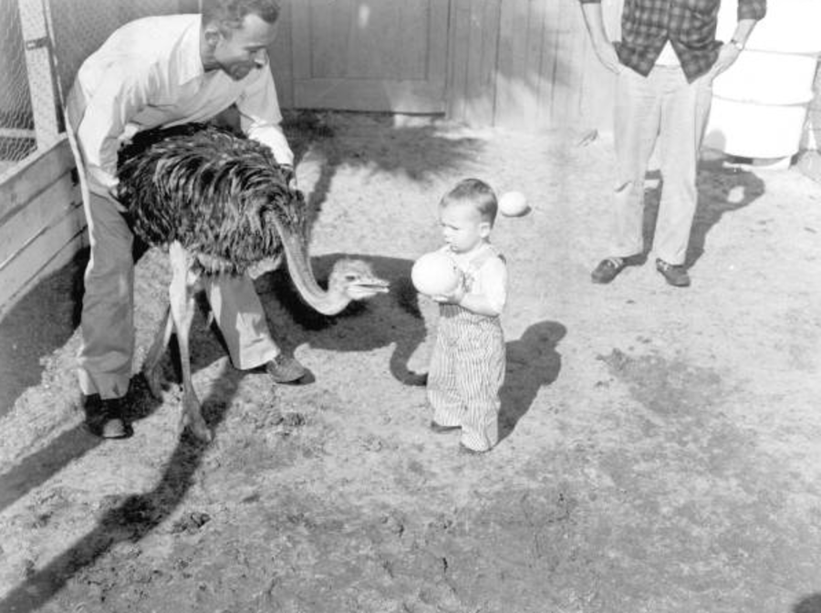 Kid And An Ostrich