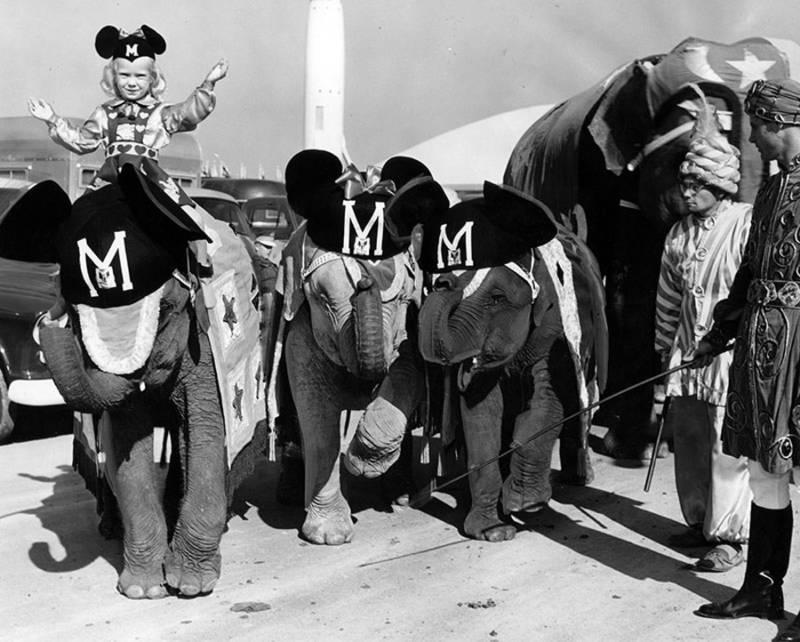 Mickey Elephants