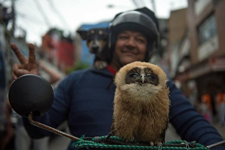 Motorcycle Owl