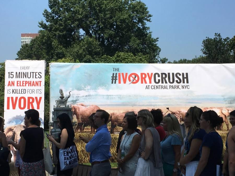 New York Ivory Crush