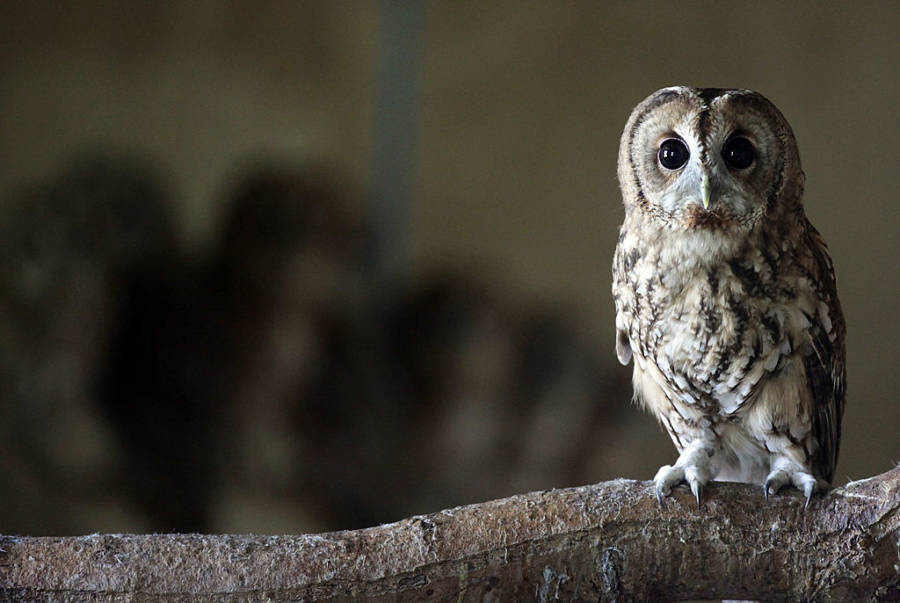 too many harry potter fans are buying pet owls conservationists warn