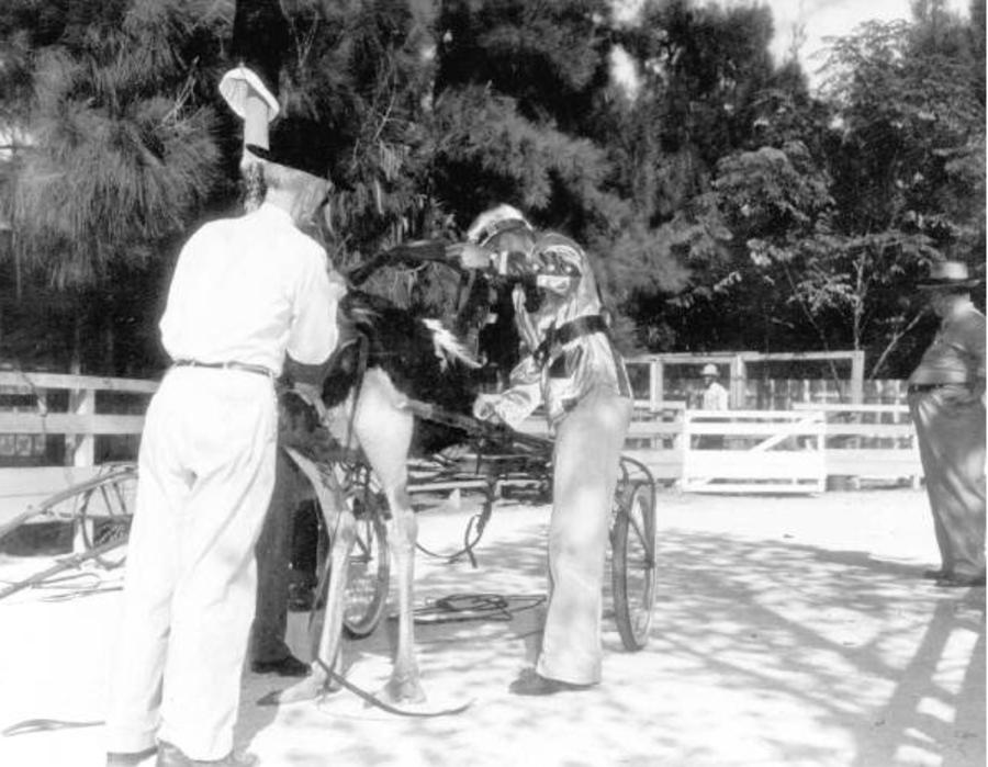 Preparing An Ostrich