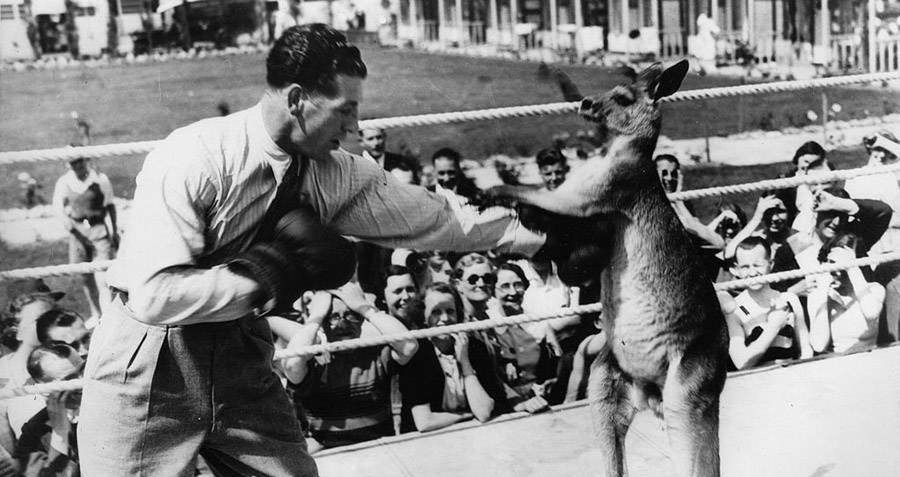 Kangaroo Boxing: 20 Bizarre And Disturbing Vintage Photos