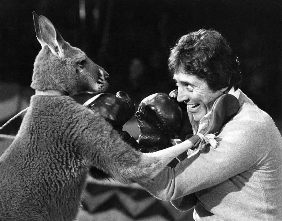 Sacha Distel Kangaroo Boxing