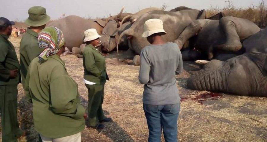 Africa Elephants Electrocuted