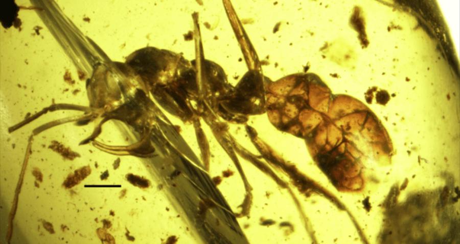 Ant Whole Body