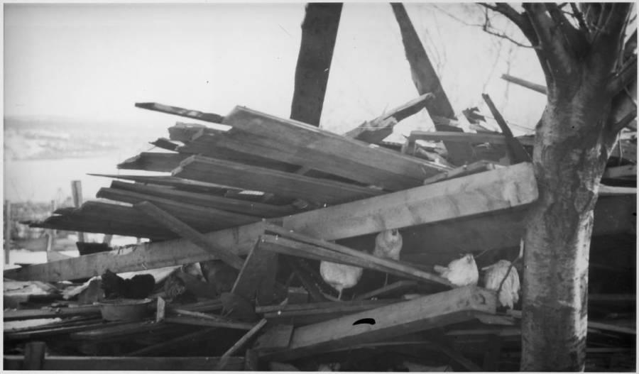 Crushed Henhouse Halifax Explosion