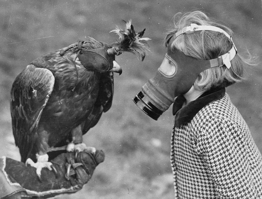 Girl Wearing Gas Mask Looking At Bird