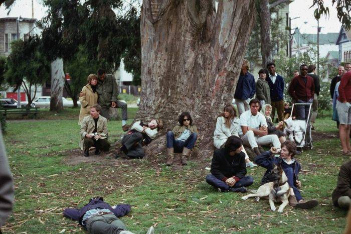 Hippies Sf Tree
