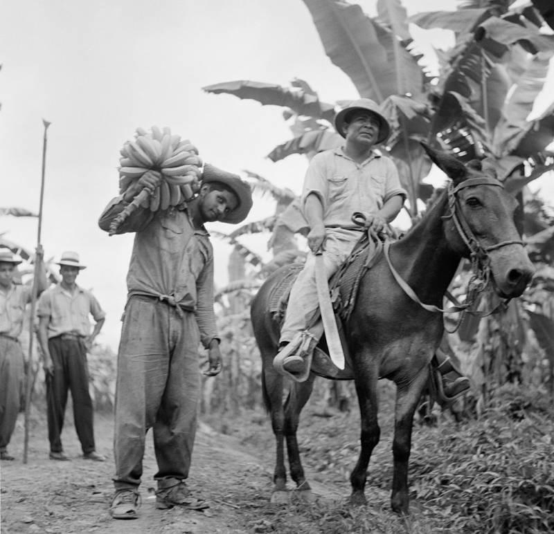 Honduras Harvesting Bananas