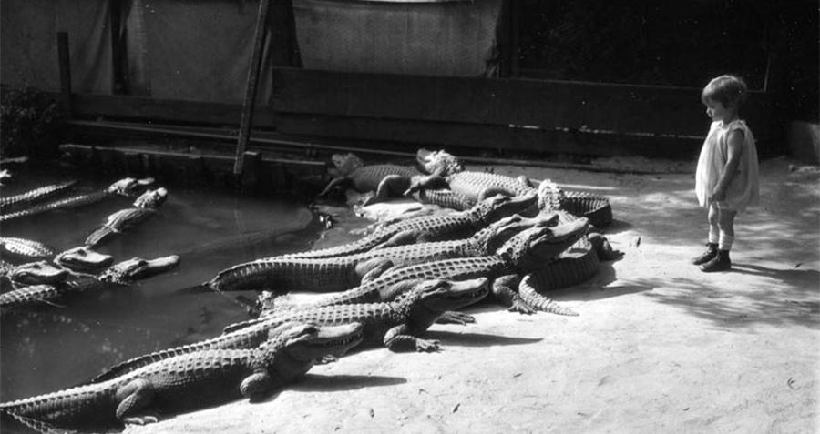 California Alligator Farm