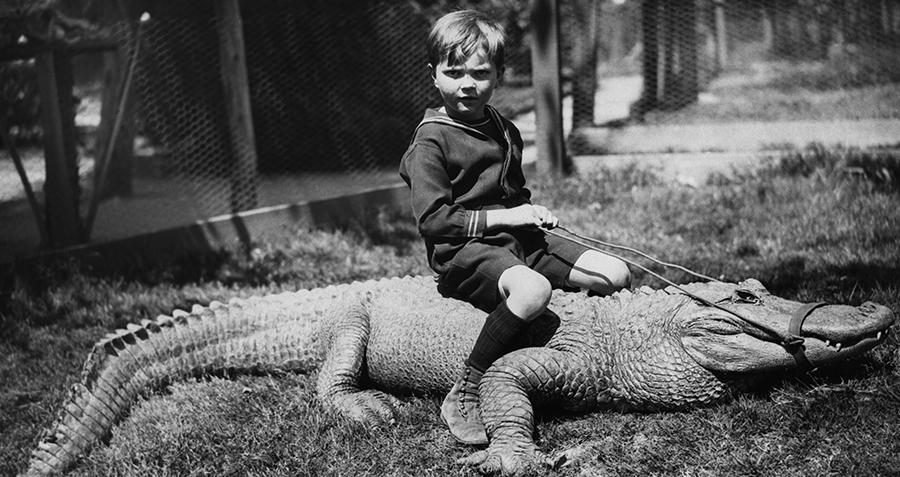 Boy Rides Gator