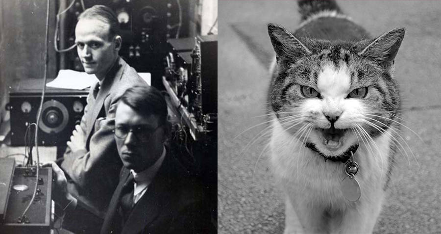 Ernest Wever and Charles Bray Cat telephone