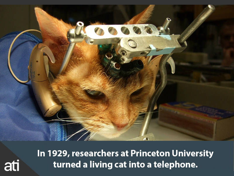 Cat Turned Into Phone
