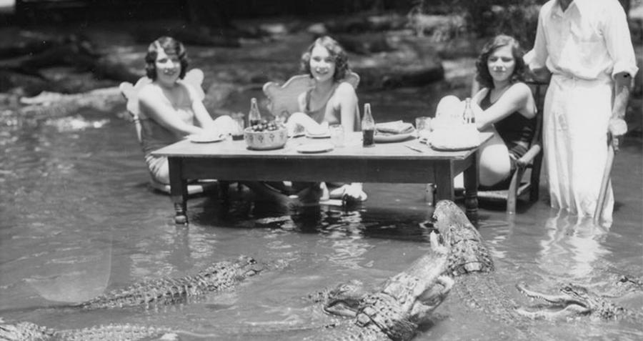 Dining Gators