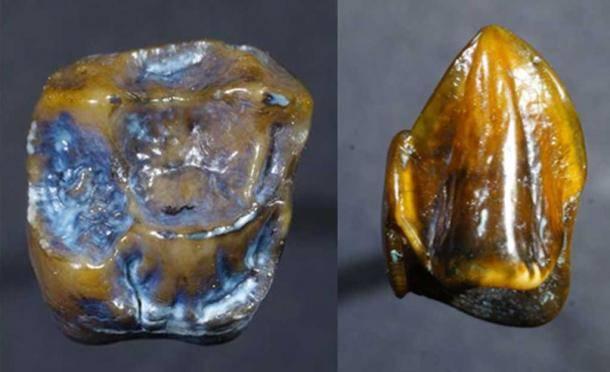 Fossilized Teeth