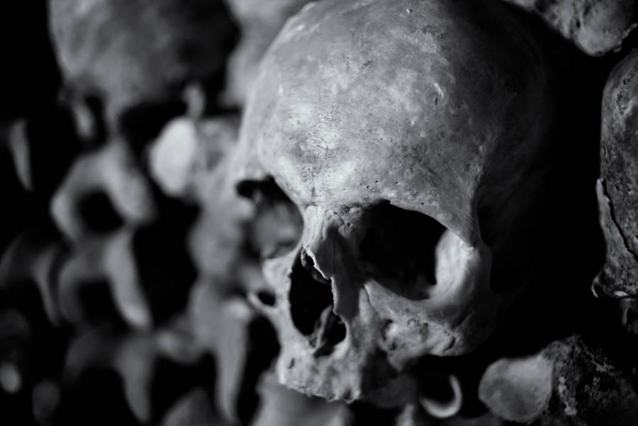 Skulls of French Catacombs