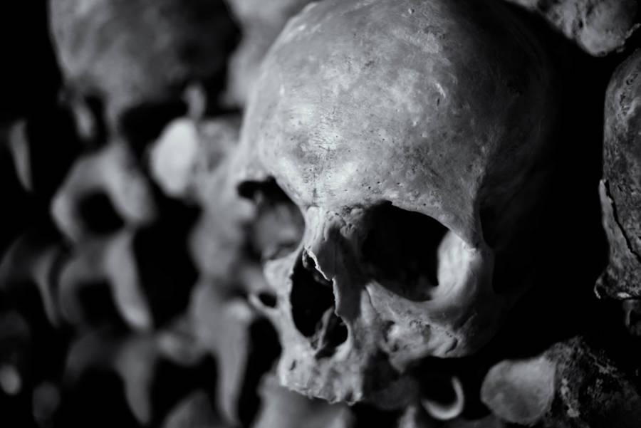 Human Skull Paris