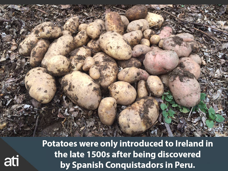 Introduction Of Potatoes In Ireland