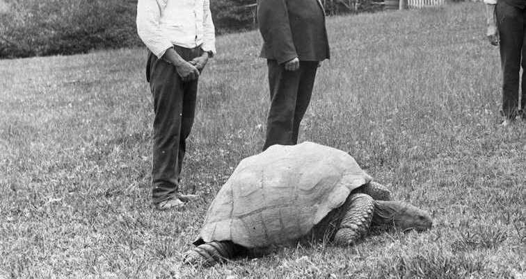 Jonathan Tortoise Wide Crop