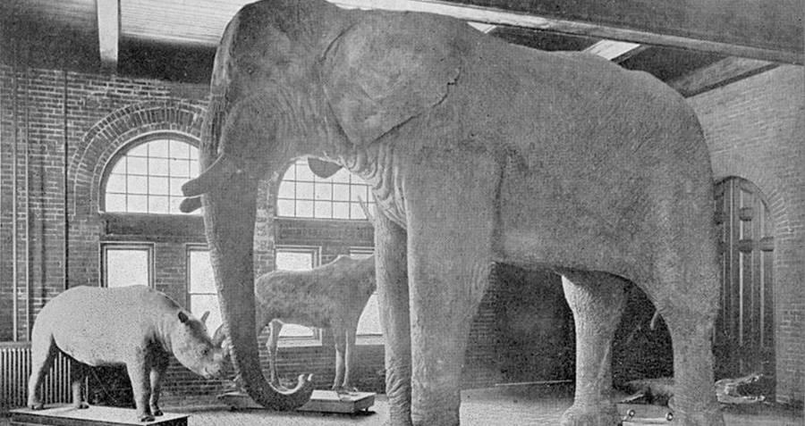 P.T. Barnum Jumbo The Elephant
