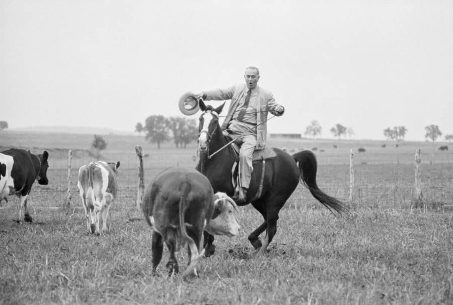 Lbj Cattle