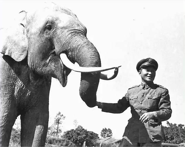 Lin Wang The Elephant