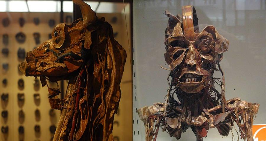 Musee Fragonard flayed llama
