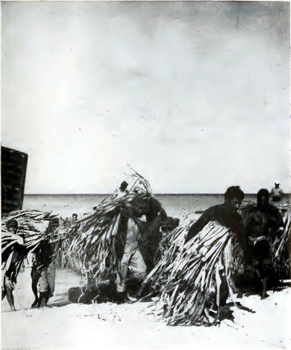 Moving Population Bikini Atoll
