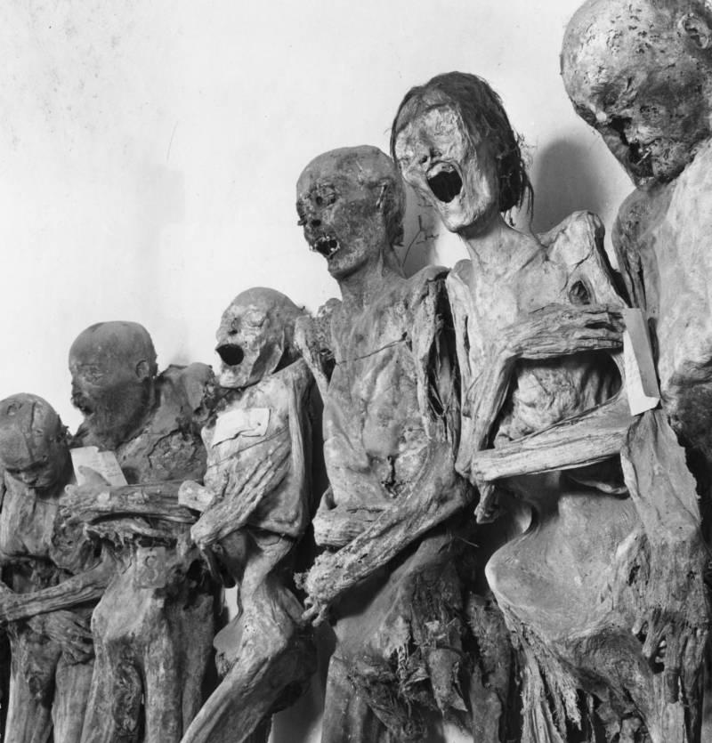Mummies In A Row