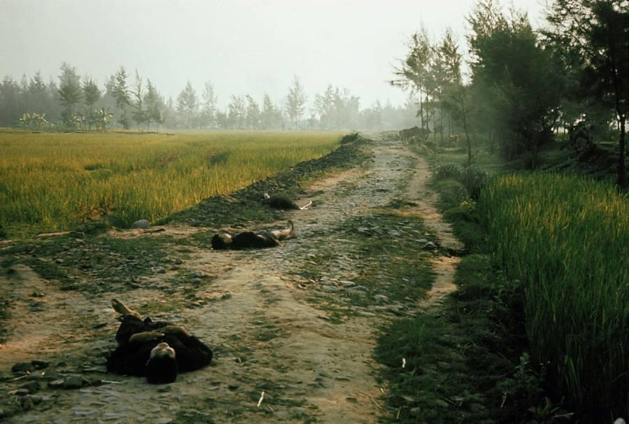 Bodies In Grass