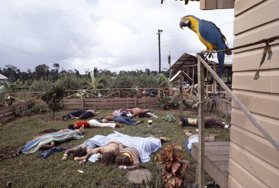 Parrot Overlooking Jonestown Dead
