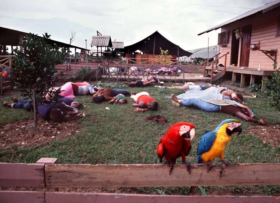 Parrots on fence near Jonestown Massacre bodies