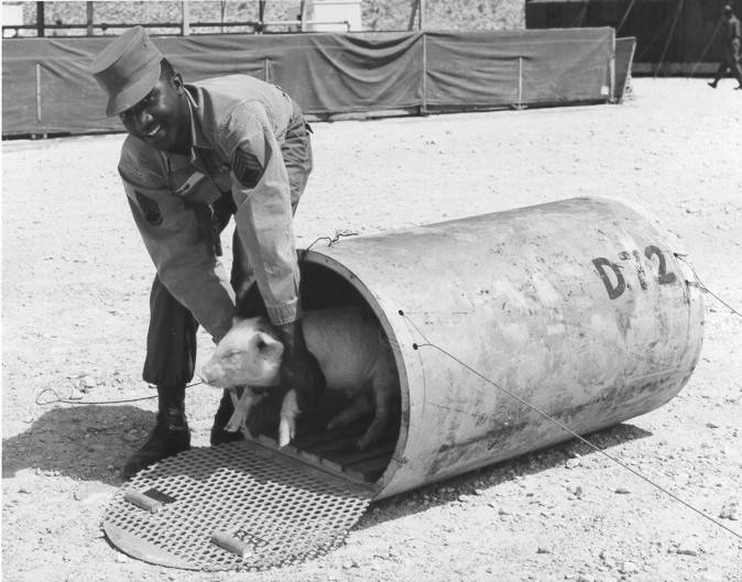 Pig In Atomic Test