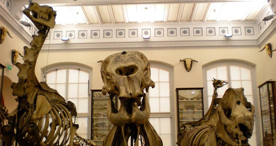 Musee Fragonard Skeletons