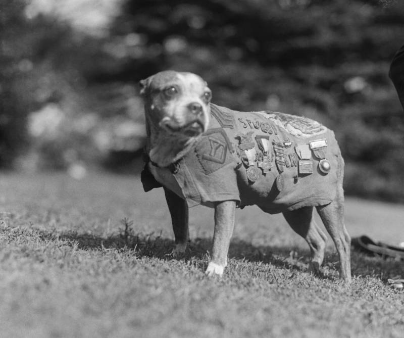 102nd Infantry Stubby the Dog