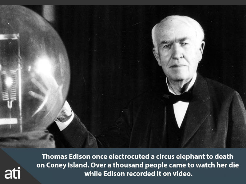 Thomas Edison Electricuting Elephant