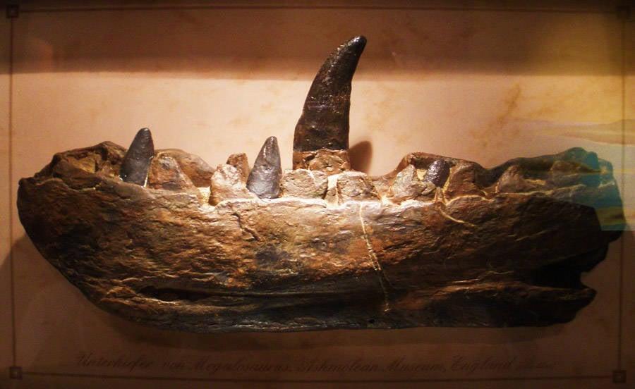 Archaeological Discoveries Megalosaurus dinosaur teeth