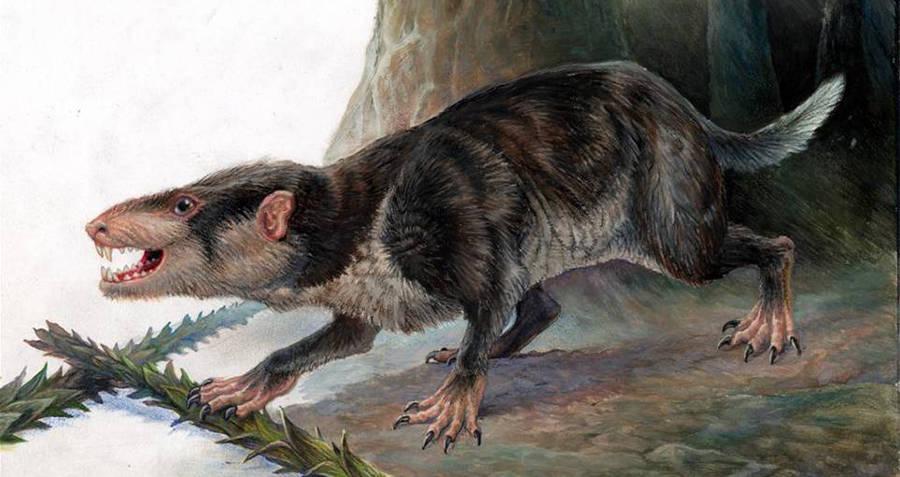 Mammal Post