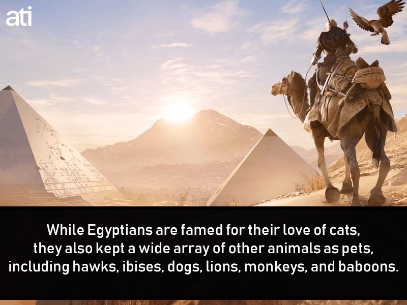 Pets In Ancient Egypt