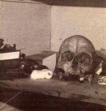 Skull in a closet